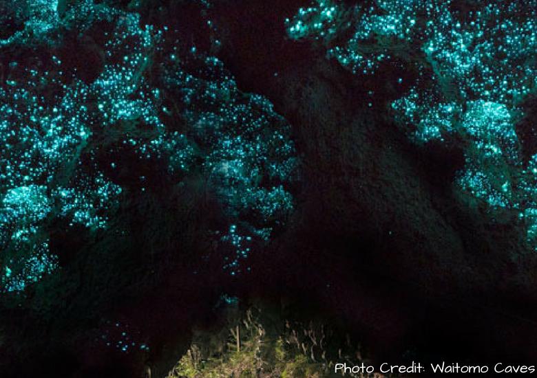 Fash Packing by SFH: Waitomo Caves - Waitomo Glowworm Cave