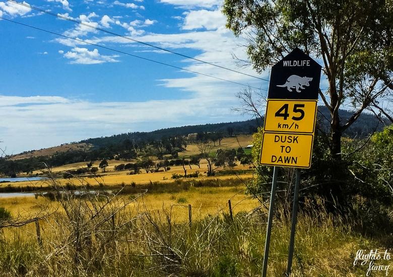 Flights To Fancy: Tasmanian Road Trip - Tasmanian Devil Sign