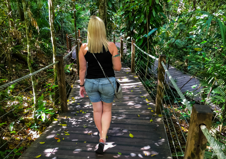 Flights To Fancy: Skyrail Rainforest Cableway Cairns - Red Peak Boardwalk