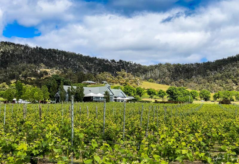 Best Wineries Tasmania_ Frogmore Creek Winery Vines